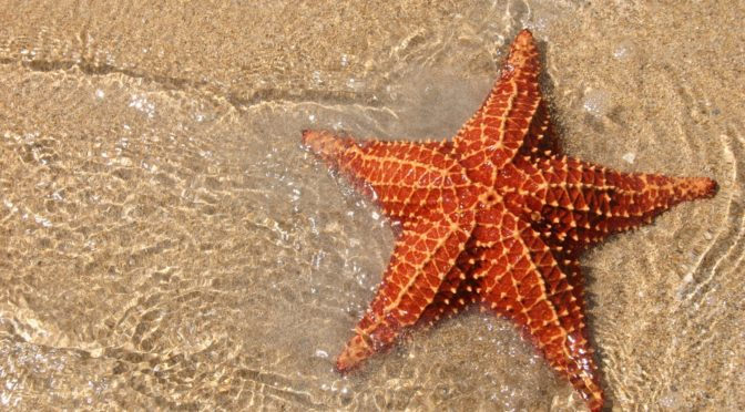 Go Back to Picking Up Starfish